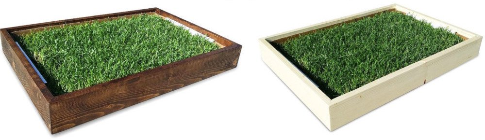 Real grass centerpiece and place card holders