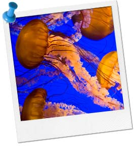 Musical Jellyfish