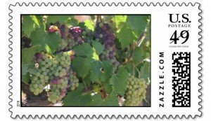 tuscany vineyard stamp