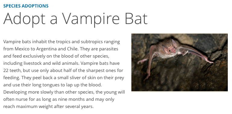 Classroom Vampire Bat Virtual Adoptions, Adopt a Vampire Bat for Halloween