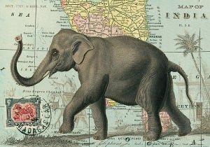 Cavallini Elephant Wrapping Paper