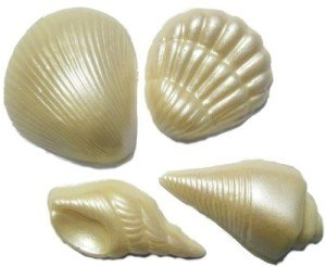 Chocolate Seashells Varied Shapes