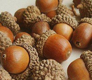 Real acorns