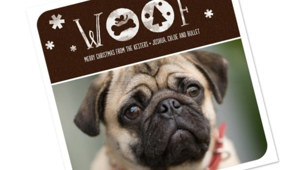 pet lover holiday photo cards - Pet Holiday Cards