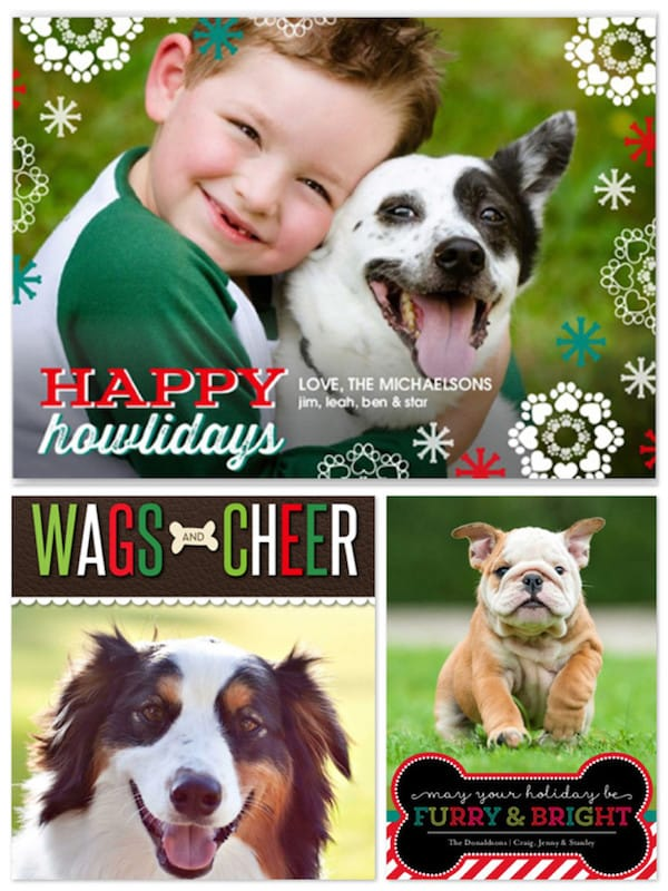 Pet Dog Lover Holiday Cards