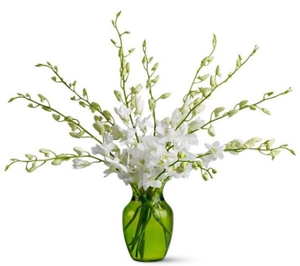 Orchid Opulence Bouquet with Green Vase