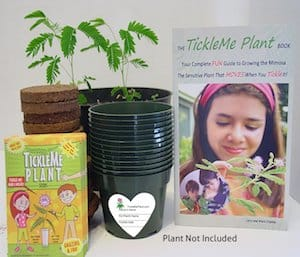 Earth Day Activity TickleMe Plant Box Kit