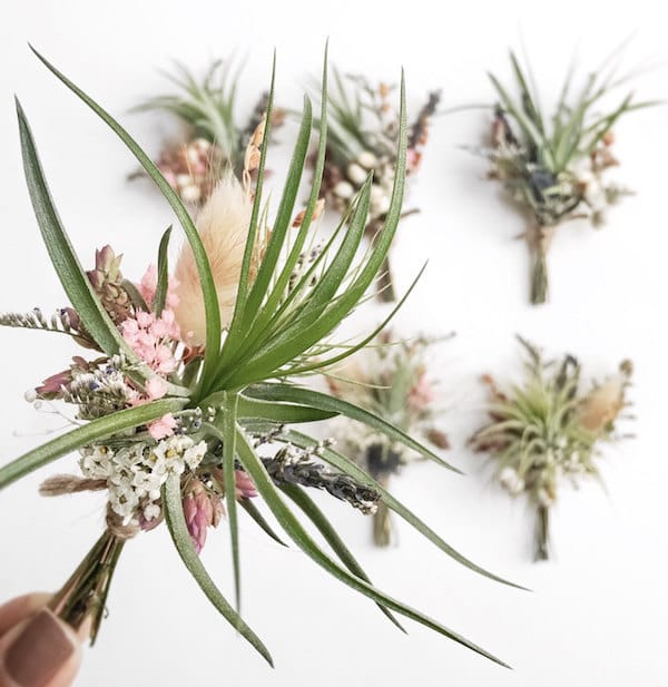 Airplant Boutonnieres