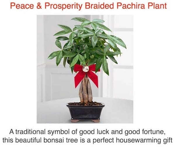 Peace Prosperity Money Tree Housewarming Gift