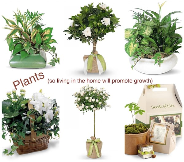 Plants Housewarming Gifts, Housewarming Party Gifts with Special Meaning