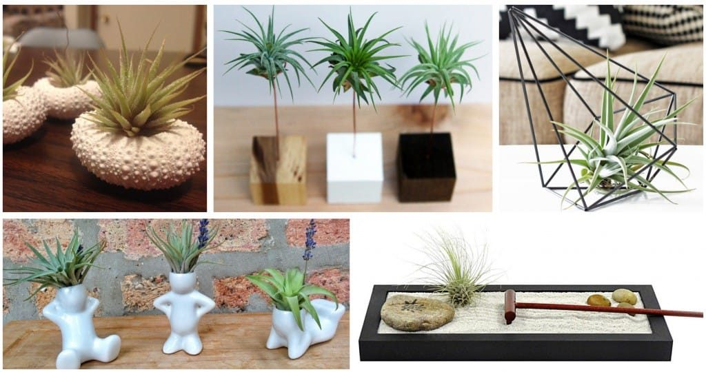 Air Plant Holiday Gifts