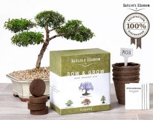 Bonsai Trees Growing Kit