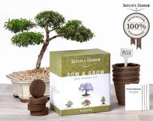 Bonsai Trees Growing Kit