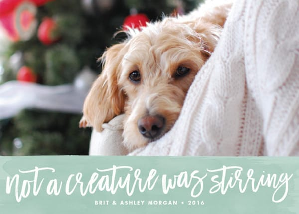 Not a Creature was Stirring Pet Holiday Card
