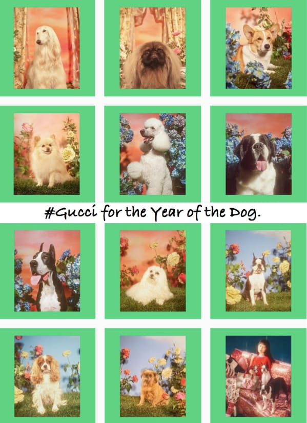 #Gucci for the Year of the Dog_Instagram